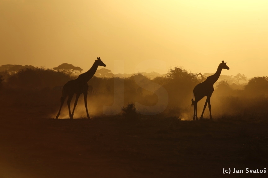 African dreamscape